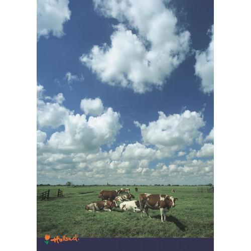 Poster Koeien